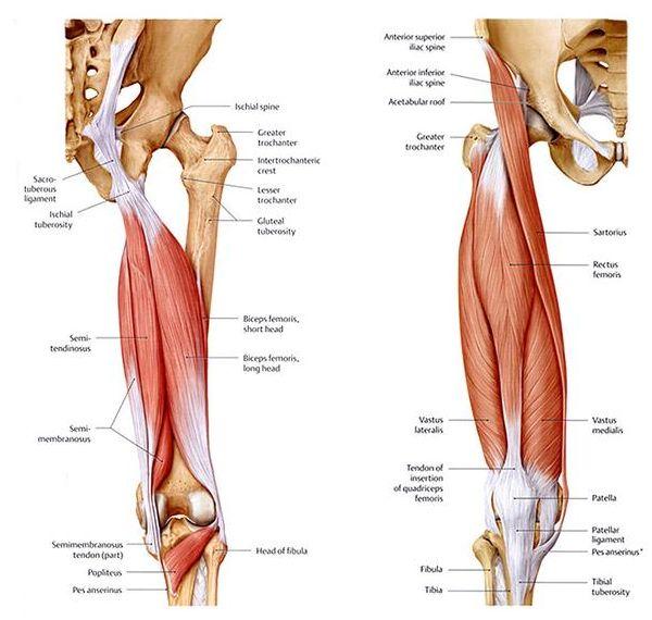 Hamstring Sprains and Strains